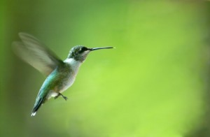 Video, stilettos and hummingbirds