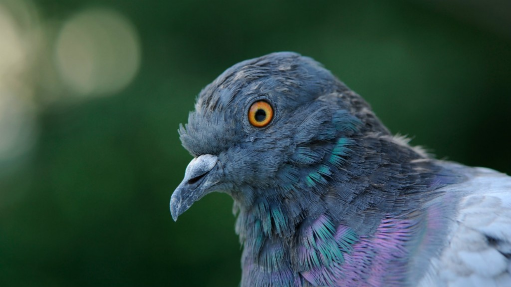 Google Pigeon Update – What Does it all Mean?